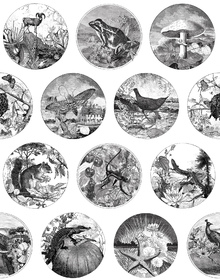 Wallpaper - Darwin on a Plate