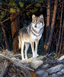 Wall Mural - Solitary Sentinel - Wolf