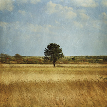 Canvas print - The Lonely Tree
