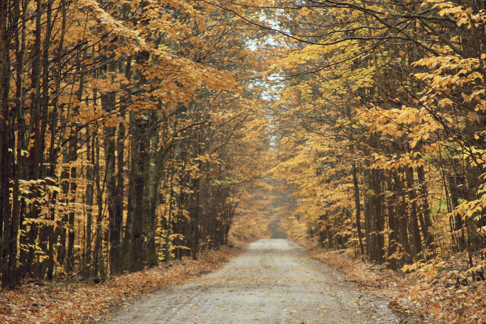 Autumn country road wall mural photo wallpaper photowall for Country wall mural