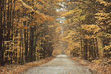 Wall mural - Autumn Country Road