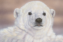 Canvas print - Baby Polar Bear