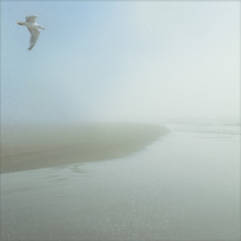 Wall Mural - Seagull Morning