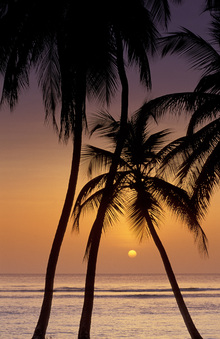 Wall Mural - Caribbean Sunset