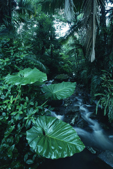 Canvas print - Rainforest