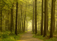 Wall Mural - Path through Golden Forest
