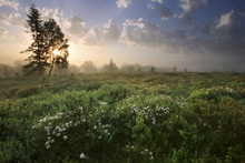 Wall mural - Delightful Meadow at Dawn