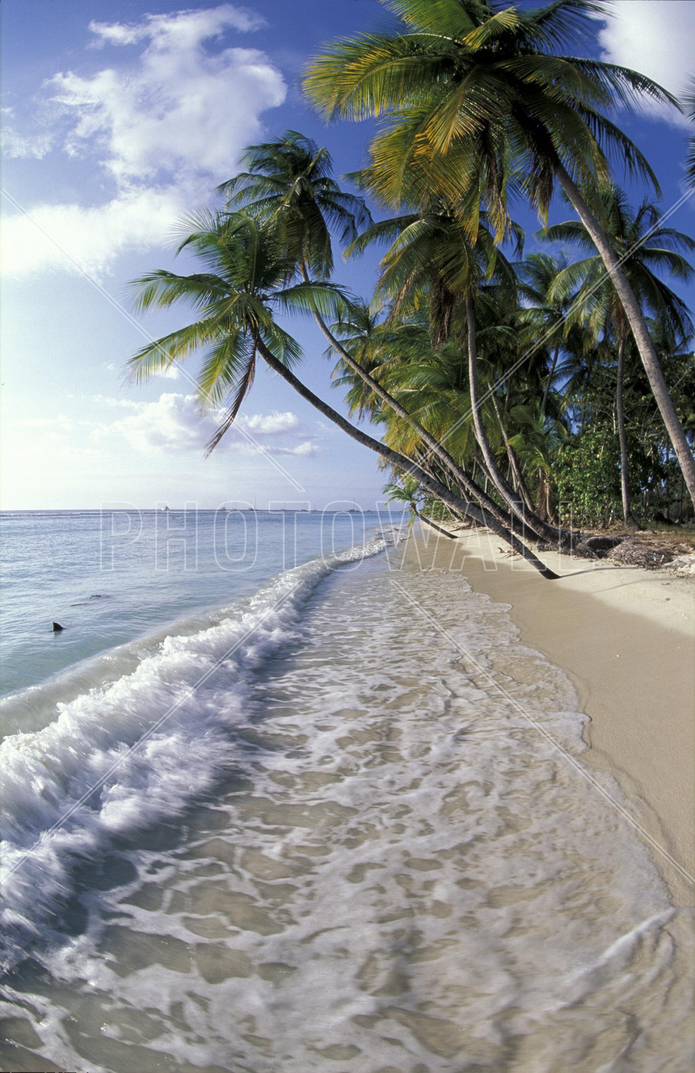 wall mural tropical seashore