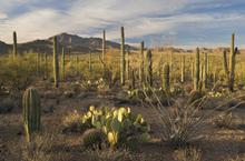 Fototapet - Cactus Land