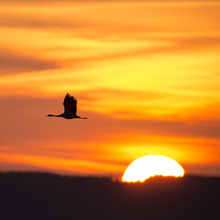 Fototapet - Crane and a Beautiful Sunrise