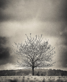 Fototapet - Tree in Halland - Sweden