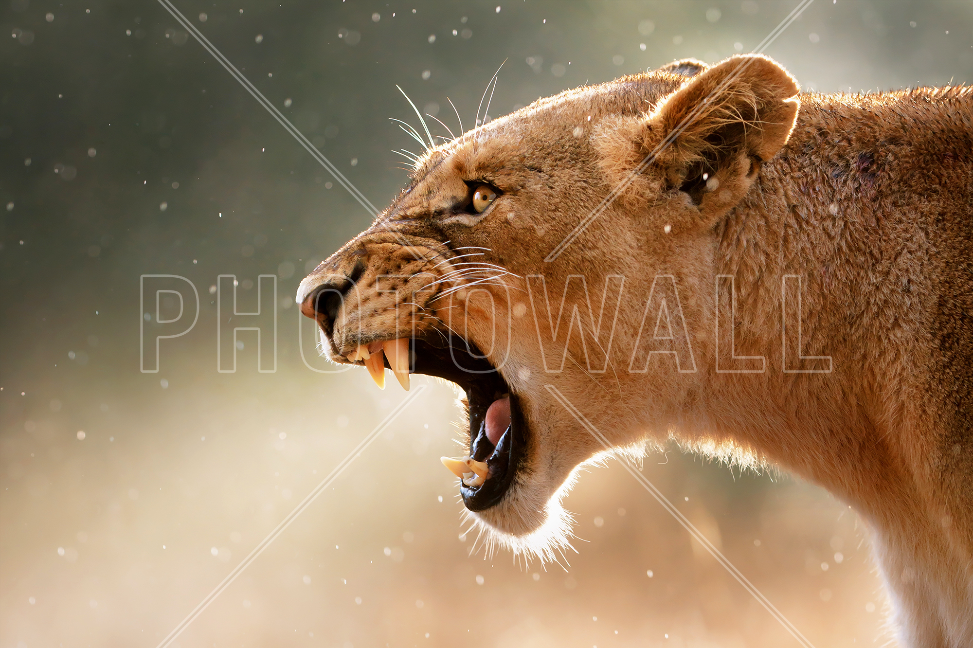 Mgm Lion Roar Sound Effect Pictures to Pin on Pinterest ... - photo#34