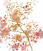 Canvas print - Pink Flower Blossom