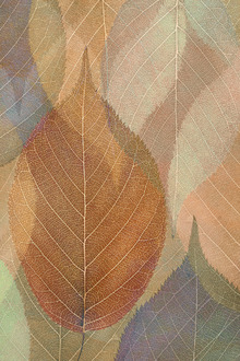 Canvas print - Autumn Leaf Pattern