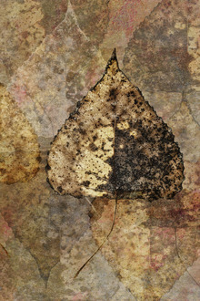 Wall Mural - Fallen Birch Leaf Pattern