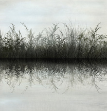 Canvas print - Grass Water Reflection