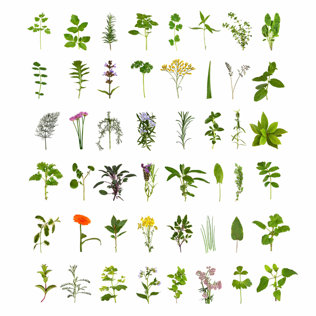 Herb And Flower Collection Wall Mural Amp Photo Wallpaper