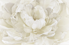 Wall Mural - Ivory White Double Tulip