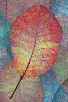 Canvas print - Read Leaf Pattern