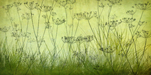 Wall mural - Wildflowers Lining the Trail - Lime