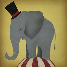 Canvas print - Circus Elephant