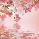 Wall mural - Tropical Pink Orchid