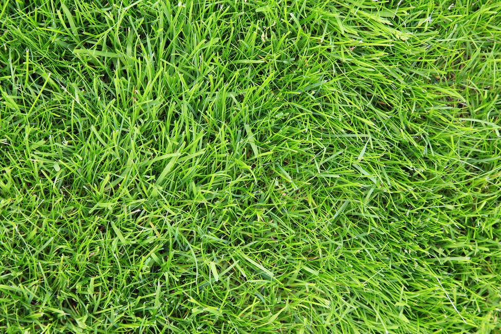 Gorgeous image for grass printable