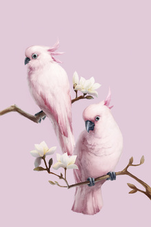 Fototapete - Pink Birds Perching on Magnolia
