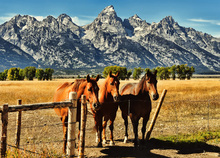 Leinwandbild - Trio in front of Teton Mountain Range