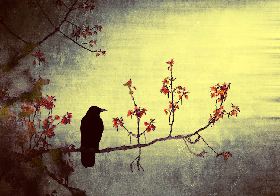 Crow on Flowering Branch