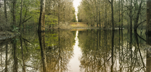 Canvas print - Suwanne Reflection Panoramic