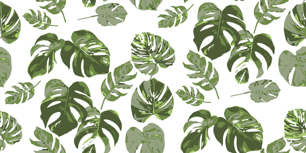 Monstera no 6