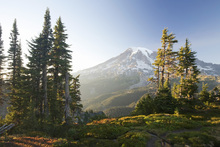 Wall mural - Mount Rainier and Alpine Forest at Sunset