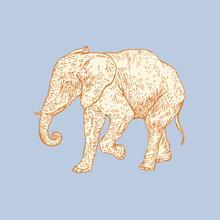 Canvas print - Elephant Cookie