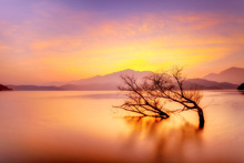 Fototapet - Rosy Sunset over Lake