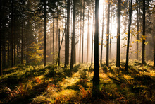 Wall mural - Fall Forest with Sunrays