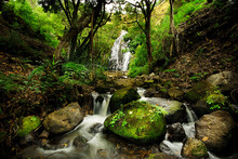 Wall mural - Peaceful Forest Waterfall