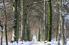 Canvas print - Snowy Tree-lined Avenue