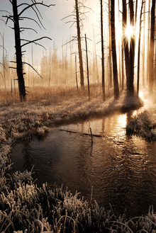 Fototapet - Frosty Yellowstone Morning