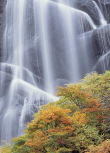 Fototapete - Japanese Waterfall in Autumn Dress