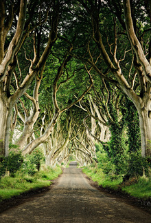 Fototapet - The Dark Hedges