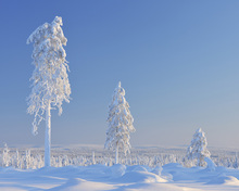 Fototapet - Winter in Finland