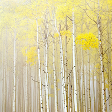 Canvas print - Aspens in Fog