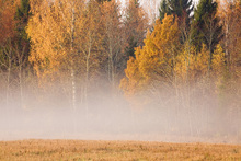 Fototapet - Fog and Fall Colors