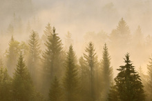 Wall Mural - Morning Mist in Bavaria