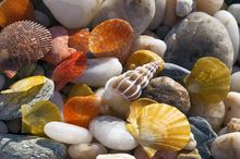 Canvastavla - Colorful Seashells and Pebbles