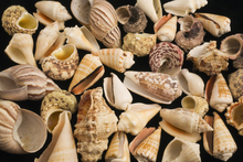 Canvastavla - Con Shells