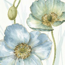 Canvas print - Blue Mountain Poppy