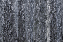 Canvastavla - Black Blue Bark