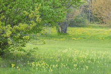 Valokuvatapetti - Spring Flowers in the Meadow
